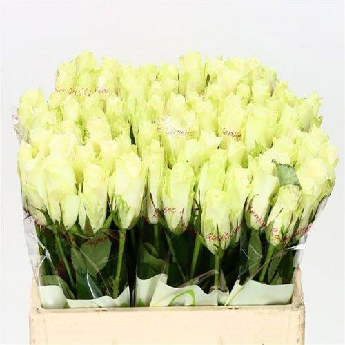 Оптовая база цветов в риге, букет полевых цветов