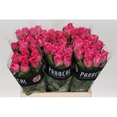Оптовая база цветов в риге, оптом доставкой краснодар